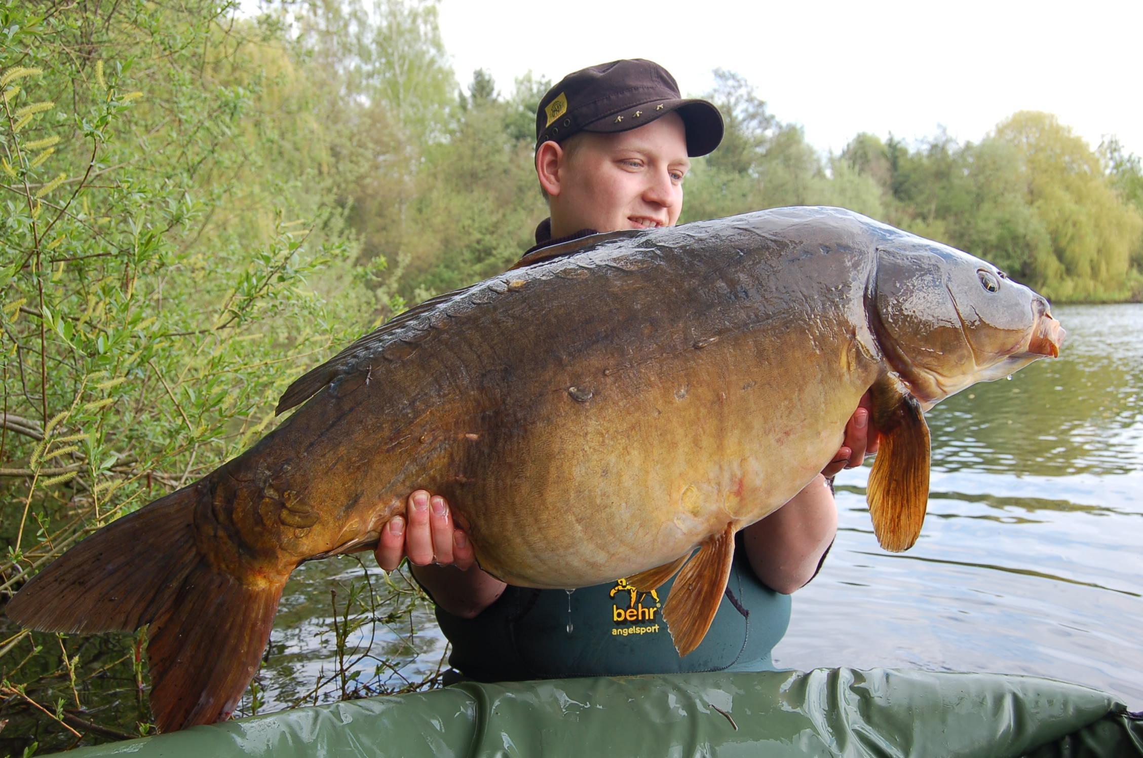 31 Pfund Spiegelkarpfen