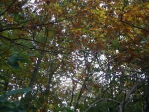 Herbstzeit - Karpfenzeit Karpfenangeln im Herbst